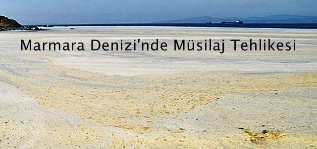 Marmara Denizi'nde Müsilaj Tehlikesi
